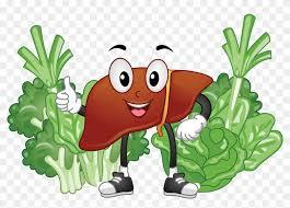 با مصرف سبزیجات و گیاهان به دفع سموم کلیه کبد و مثانه خود کمک کنید. رژیم درمانی رژیم انلاین هایپر دایت