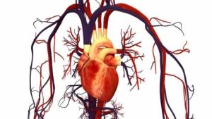نرم افزار رژیم درمانی رژیم آنلاین رژیم نارسایی قلبی، فشارخون، سیروز کبدی و نفروز